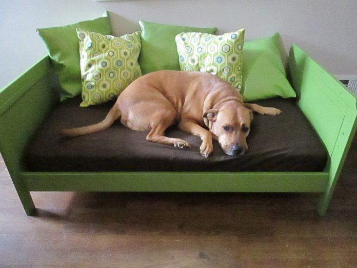 dog daybed furniture